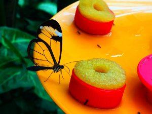 benalmadena-park-motyli-atrakcje